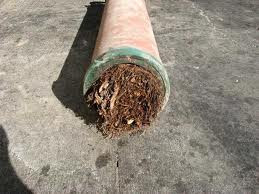 roots in pipe 2